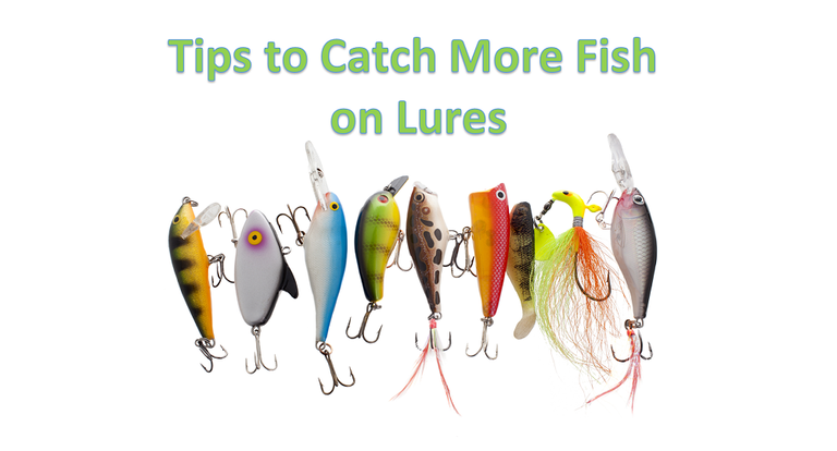 5 Tips to Catch More Fish with Lures