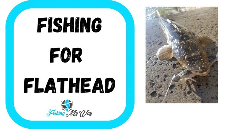 Fishing for Flathead – Best Ways to Catch More Flathead
